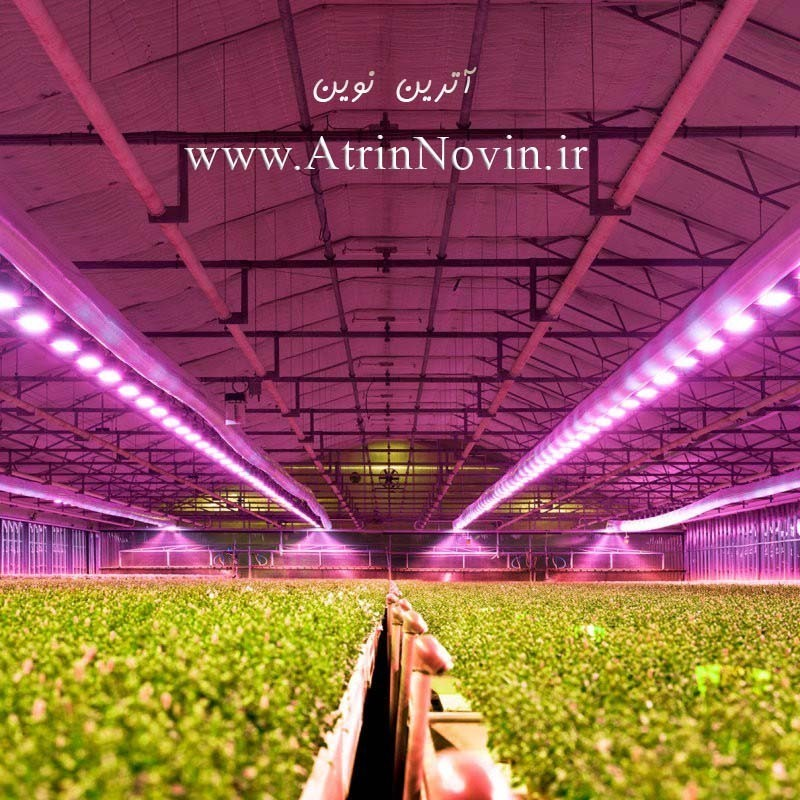 LED COB 3W 220V ویژه رشد گیاه