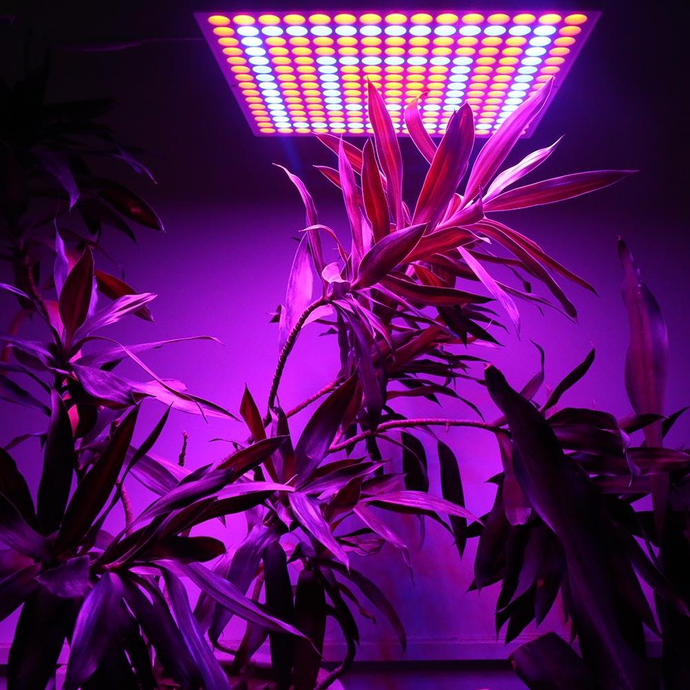 لامپ رشد گیاهان چراغ رشد گیاه - آترین نوین