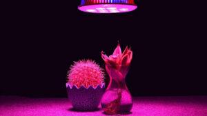 چه نوع لامپ رشد گیاه LED برای گیاهان بهتر است؟